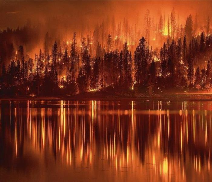 Fire Damage Alabama Forest Facts